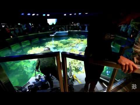 Marine wildlife photographer captures life in the Giant Ocean Tank