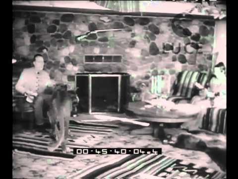 … e per finire animali domestici
