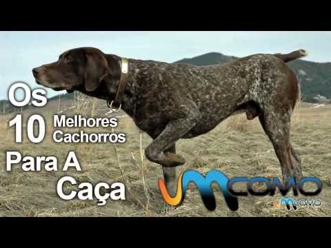 Os 10 melhores cachorros para caça