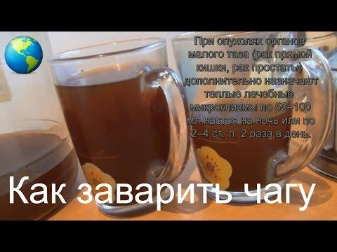 Как приготовить раствор от фитофторы из чаги