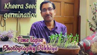 Kheera ke seed germination ki Time lapse Photography Dekhiye.