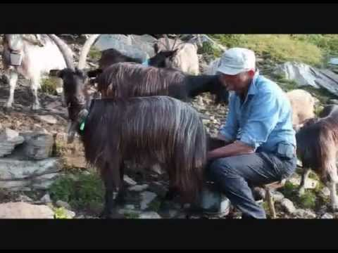 Giuseppe e le sue capre orobiche 1 parte