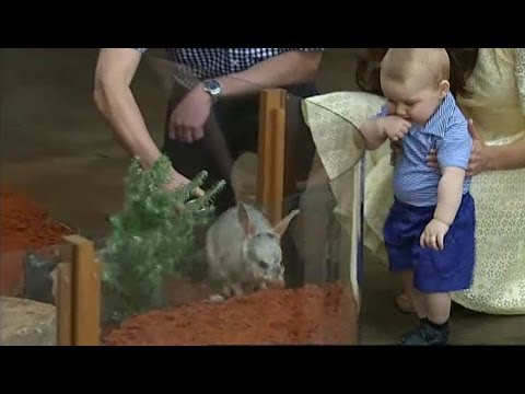 Prince George finally meets a bilby VIDEO