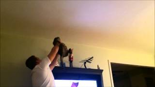 Cat and Owner chasing a bug