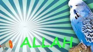 ALLAH Muhabbet Kuşu ve Papağan Konuşturma Sesi hazır ses kaydı  1 saat