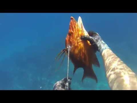 Spearfishing a HOG FISH in CUBA - Freediving hunting - Pesca in apnea
