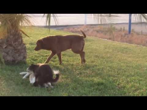 Epic Dog Sex Fail video