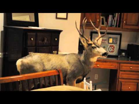 Deer crashes into home on Christmas Eve!