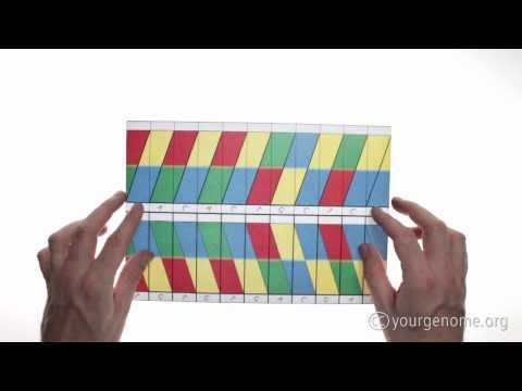 Днк оригами как сделать