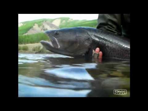 как монголы ловят рыбу руками