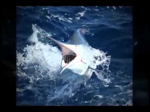 Costa Rica Sport Fishing Packages | Call (888) 995-1507