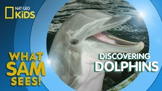 Discovering Dolphins | What Sam Sees