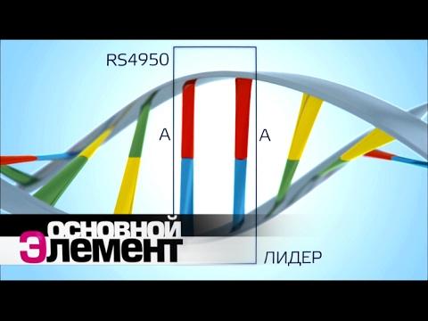 Ген власти. Доминирование и подчинение | Основной элемент