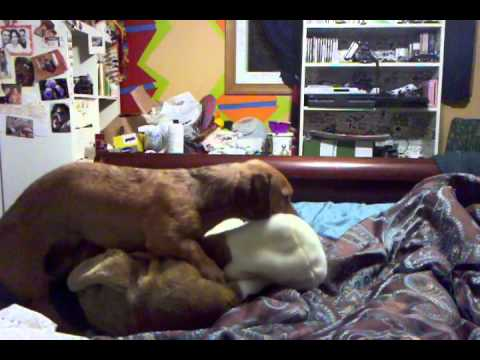 Dog knotted - YouTube