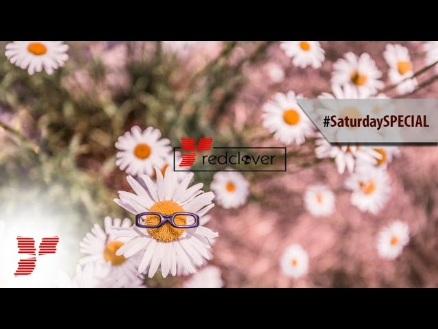 Fake Feathers - Everyday Love    #Saturday Special