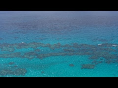 Don't Miss this Chance to Protect Bermuda's Blue Halo | Pew