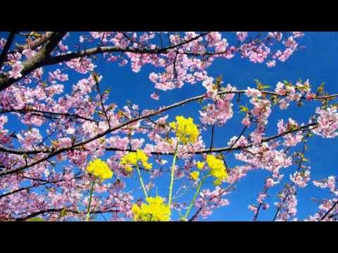 Dik Dik - Il Primo Giorno Di Primavera