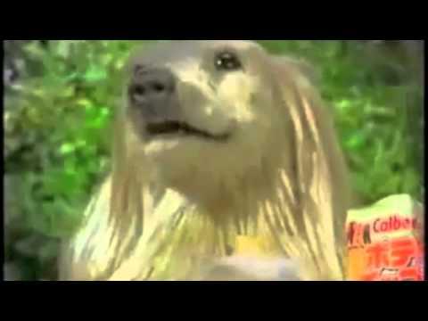 creepy japanese dog commercial mixman2012 remake   youtube