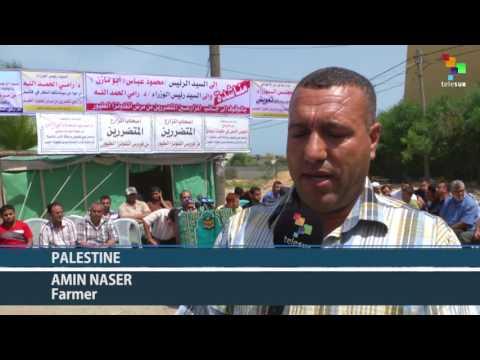 Palestinian Poultry Farmers Demand Gov't Compensation for Bird Flu Losses