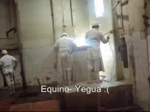Matanza equino Yegua