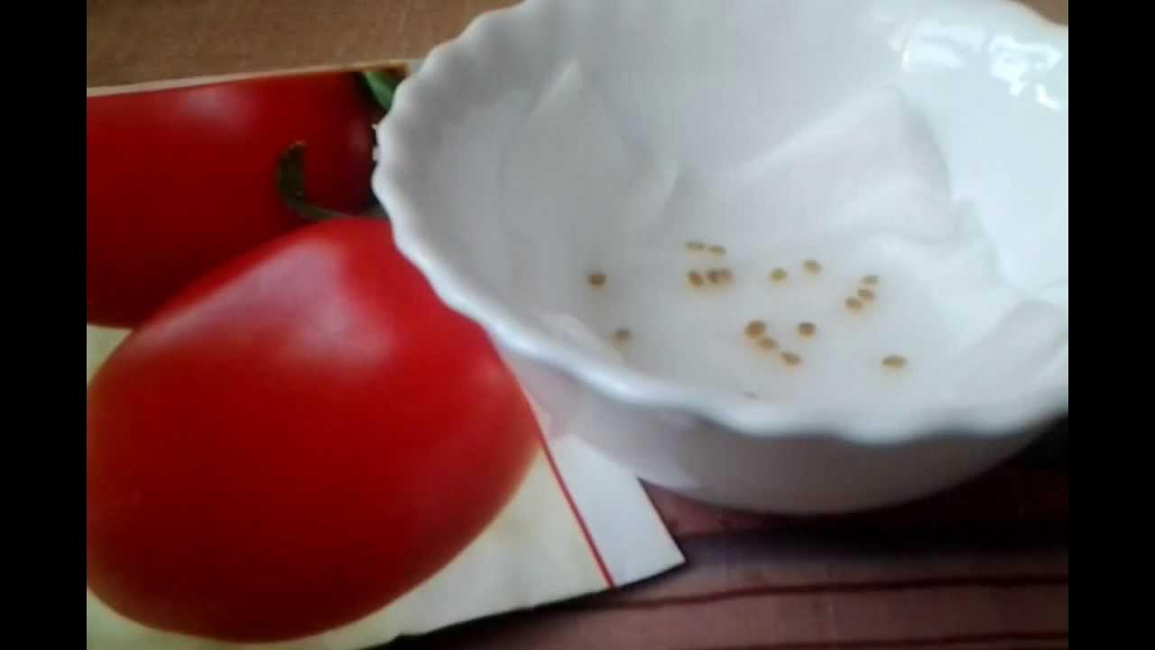 Как заготовить семена помидор для рассады в 495