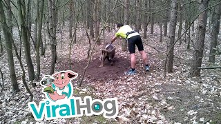 Trapped Mouflon (wild sheep) Rescued By Jogger || ViralHog
