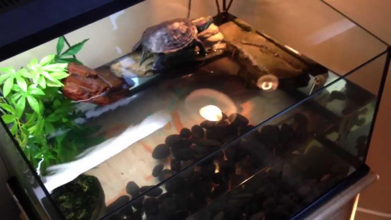 New turtle set up Exo terra turtle terrarium - molluskco - YouTube