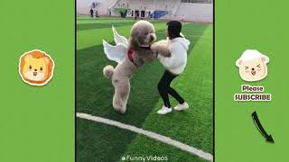 Funny Videos | Funny & Cute Cats and Dogs, Funny Pet Animals Video #3