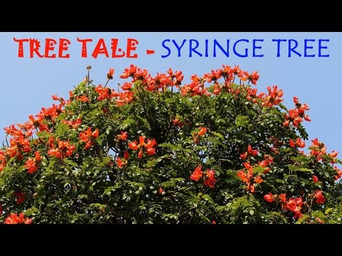 Toys Names in English Tree | English | Toy Tree