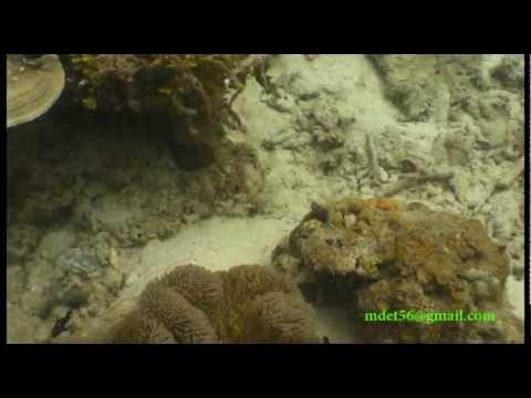 Marine Life of Pulau Redang, Malaysia
