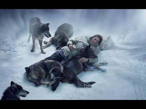Беременная волчица самый опасный зверь 537