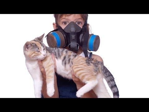How to Reduce Cat Odor & Cat Poop Odor | Cat Care