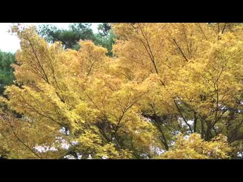 八百津町 「めい想の森」 ~紅葉~