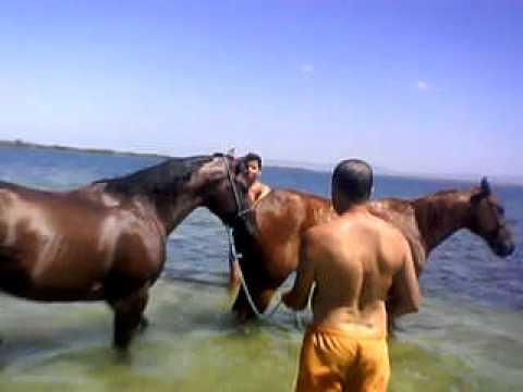 Cavalo Eternaly Estew cruzando na Égua  do vaqueiro Dihêgo