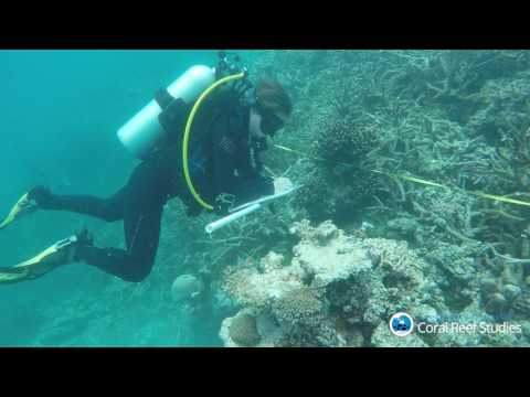 TropicNow: JCU researchers survey coral reefs near Lizard Island on Great Barrier Reef
