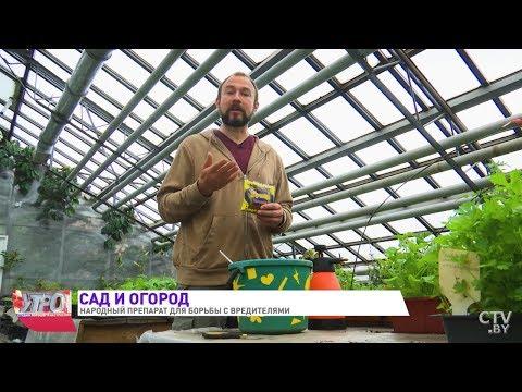 Мыло в саду и огороде – применение