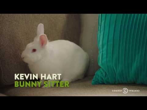 "Kevin Hart Wonders About a Day in the Life of a Bunny - ""The Secret Life of Pets"""