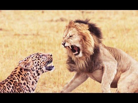 Tiger Graphics  Graphics Photography Marketing