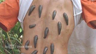 Too many leeches on Eugene Byrd | leech suck blood of Eugene Byrd | Anacondas (2004) Movie Scene
