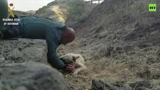 Spanish Civil Guard saves dog from wildfires