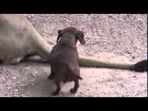 El perro no solo es el mejor amigo del hombre