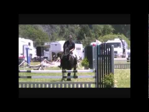 Friesian Horses Jumping Zanzibar Friesian Horse Show