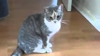 Su Yerine Alkol İçen Kedi   O sarhoş dolu anlar