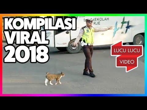 Kompilasi Video Viral 2018 - GELI! Kucing Hamil - Ulat Bulu