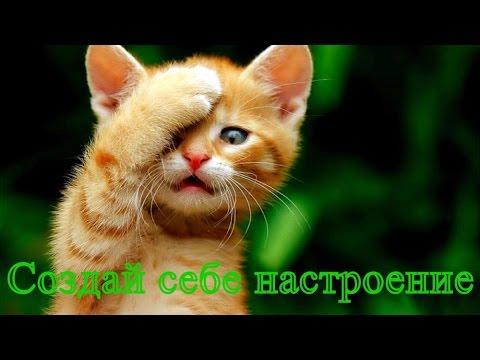 Смешное видео о животных Позитив для детей Прикольное видео Создай себе хорошее настроение