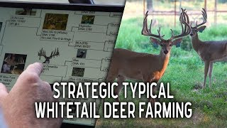 Strategic Typical Whitetail Deer at Big Rack Ranch
