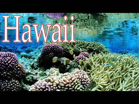 World's largest marine reserve created off Hawaii - 720 News