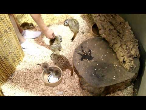 L'N'D Exotics - Exotic Pets, Reptiles & Exotic Fish Pet Shop - Mansfield