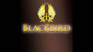Watch Blackbird Black Rain video