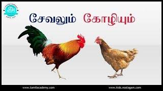 Sevalum Koliyum | சேவலும் கோழியும் | Cock and Hen | Rooster and Chicken